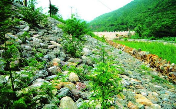 河道石笼网工程应用图