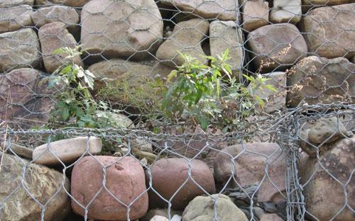铁丝石笼装石头实例图